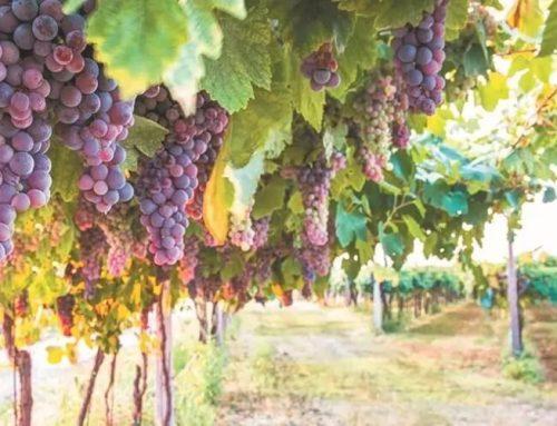 ¿Cuáles son los retos de la industria del vino en México?