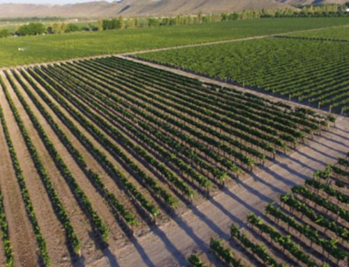 El vino mexicano en números