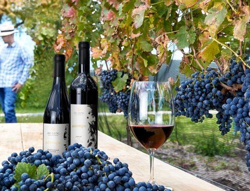 Es el momento del vino mexicano: Paz Austin